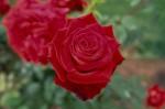 029-rosa-feli-5