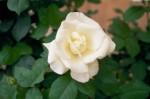a006-rosa-feli-15