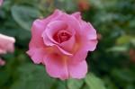 a008-rosa-feli-16