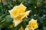 a011-rosa-feli-18