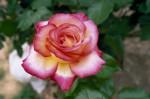 a013-rosa-feli-20