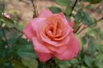 a014-rosa-feli-21