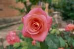 a015-rosa-feli-22