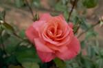 a019-rosa-feli-25