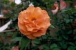 a023-rosa-feli-27