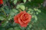 a030-rosa-feli-33