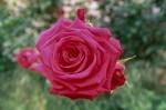 a031-rosa-feli-34