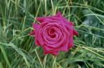 a032-rosa-feli-35