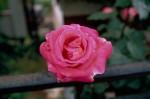 a034-rosa-feli-37