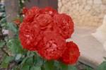 a038-rosa-feli-38