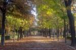 2011nov28-madrid-11h13-parque-el-retiro-hojas-caidas
