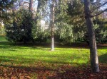 2011nov28-madrid-11h18-parque-el-retiro-jardi