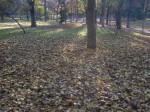 2011nov28-madrid-11h18-parque-el-retiro