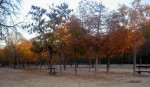 2011nov28-madrid-18h44-parque-el-retiro-tree-colours