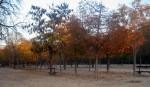 2011nov28-madrid-18h44-parque-el-retiro-tree-colours