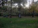 2011nov28-madrid-18h50-parque-el-retiro-arbres