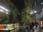 2011nov28-madrid-19h50-estacio-tren-atocha-interior